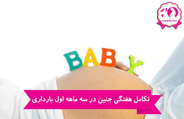 تکامل هفتگی جنین در سه ماهه اول بارداری